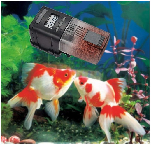 Benefits of Automatic Fish Feeder